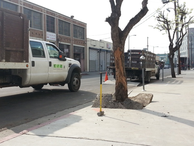 There are a few dead trees in this area, and with the help of the LA Conservation Corp, we are removing them to be replaced by new trees.